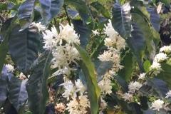 Floracion 1